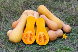 Butternut Squash: 149% of the RDA for a 1 cup serving