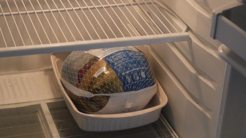 Bird in the fridge